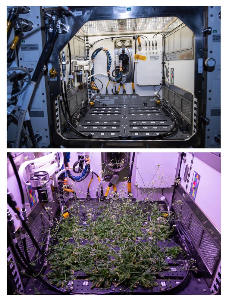 Астронавты космической станции работают над садовыми светодиодами